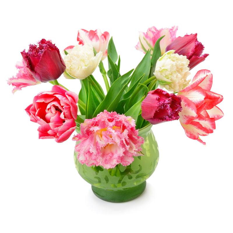 bloemen bij saamborgh